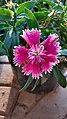 Sharpener flower.jpg