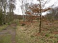 Sherwood Forest - Footpath View - geograph.org.uk - 722476.jpg