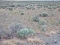 Shoshone sagebrush steppe (9722983365).jpg