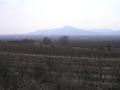 Slovak tokaj wineyard.png