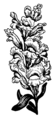 Snapdragon (PSF).png