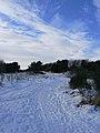 Snow Tracks (3263613526).jpg