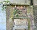 Solanum dulcamara on monument wall, Ayr Auld Kirk, South Ayrshire.jpg