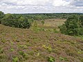 Sopley Common - geograph.org.uk - 515006.jpg