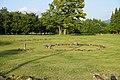 Special historic site Oyu Stone Circles , 特別史跡 大湯環状列石 - panoramio (3).jpg