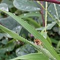 Spider in rainy day.jpg