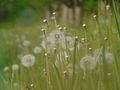 Spring - 6 (2009). (12973115035).jpg