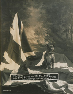 Squidge Regimental pet of the 24th Battalion (HS85-10-29943)