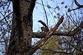 Squirrel-barking-at-me-in-a-tree - West Virginia - ForestWander.jpg