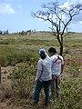 Starr-030429-0077-Myoporum sandwicense-habit with Kim and Paul-Lua Makika-Kahoolawe (24549427711).jpg