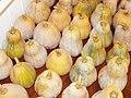 Starr-131002-2358-Cucurbita moschata-harvested fruit-Hawea Pl Olinda-Maui (25108997732).jpg