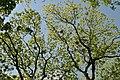 Staryi-park-15056650.jpg