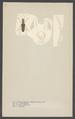 Stenocorus - Print - Iconographia Zoologica - Special Collections University of Amsterdam - UBAINV0274 001 10 0015.tif