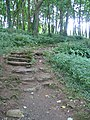 Steps on the path to Din Lligwy - geograph.org.uk - 952829.jpg