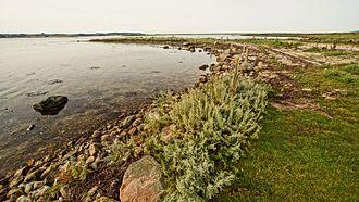 Coastline of Djursland - The shoreline at Strands Gunger in Begtrup Bay with the wave and current made phenomena, krumodde ( spit)