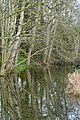Stream near East Budleigh - geograph.org.uk - 1140429.jpg