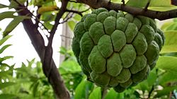 Sugar-apple fruit