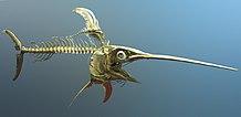 Scheletro di pesce spada
