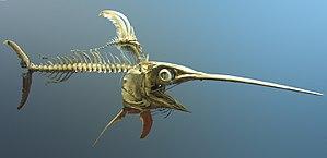 Swordfish (Xiphias gladius) skeleton at the Na...
