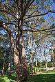 Sydney NSW 2000, Australia - panoramio (343).jpg