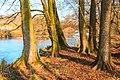 Tůně u Bohdanečského rybníka 01.jpg
