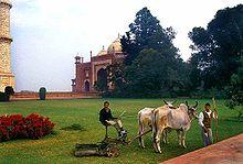 Taj Mahal Oxen.jpg