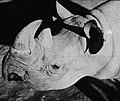 Taronga Park Zoo (26992449962).jpg