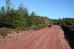 File:Teindland Forest - geograph.org.uk - 373935.jpg