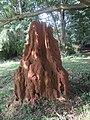 Termite mound - Ghana, West Africa.jpg