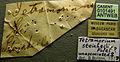 Tetramorium steinheili casent0101491 label 1.jpg