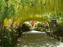 The Laburnum Arch at Bodnant Garden - geograph.org.uk - 207049.jpg