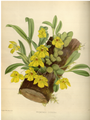 The Orchid Album-01-0026-0007.png