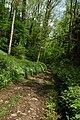 The Wye Valley Way through Limekiln Wood - geograph.org.uk - 803468.jpg