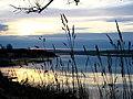 The Ythan Estuary - geograph.org.uk - 178613.jpg