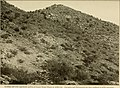 The vegetation of a desert mountain range as conditioned by climatic factors (1915) (14776075884).jpg
