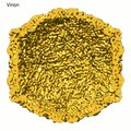 File:Three-dimensional-Structure-of-Victorivirus-HvV190S-Suggests-Coat-Proteins-in-Most-Totiviruses-ppat.1003225.s005.ogv