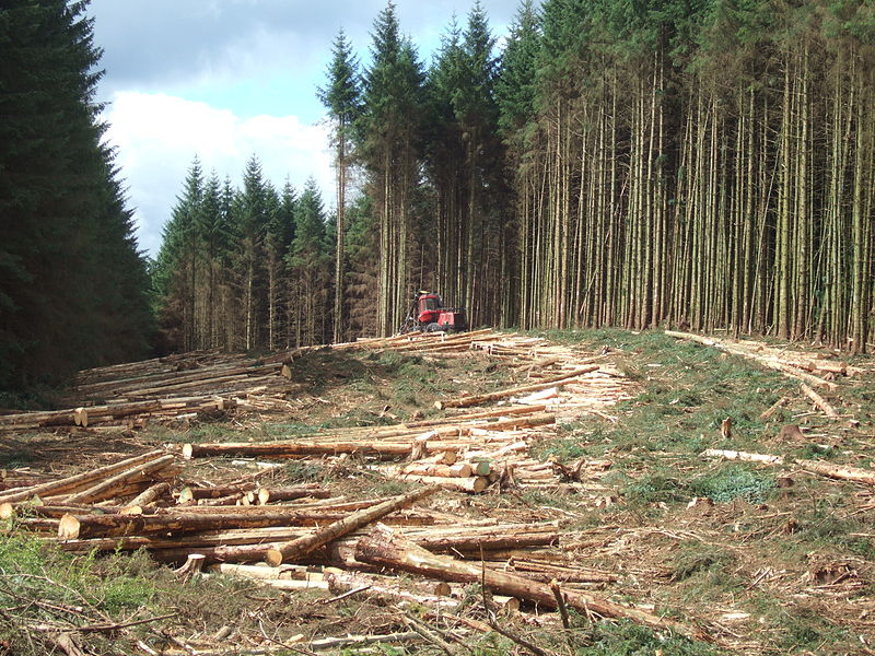 File:Timber harvesting in Kielder Forest.JPG