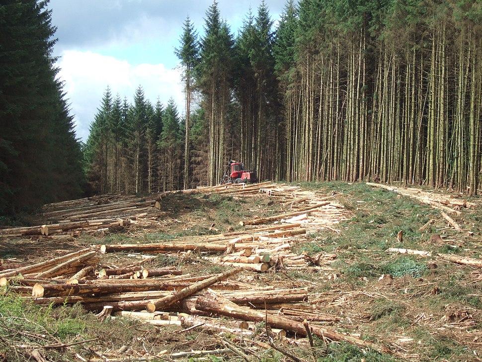 Timber harvesting in Kielder Forest