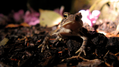 Toad in garden (6126092700).png