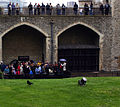 Tourists observing a raven in the Tower of London.jpg