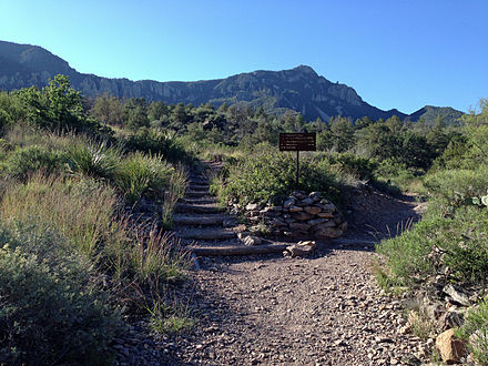 Emory Peak Trail junction and Emory Peak.JPG