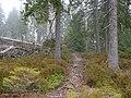 Trail near Sonnenkappe 20.jpg