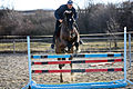 Training horse jumping.jpg