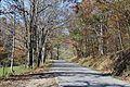 Treelined - panoramio.jpg