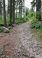 Tremsin, forest (4).jpg