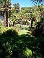 Tropical Palms in Ventor Botanic Garden - geograph.org.uk - 1009681.jpg