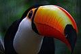 Tucano - Parque das aves - Foz do Iguacu - Brasil (23909941809).jpg