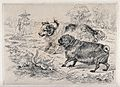 Two dogs (a King Charles spaniel (?) and a pug dog) in a par Wellcome V0023212.jpg