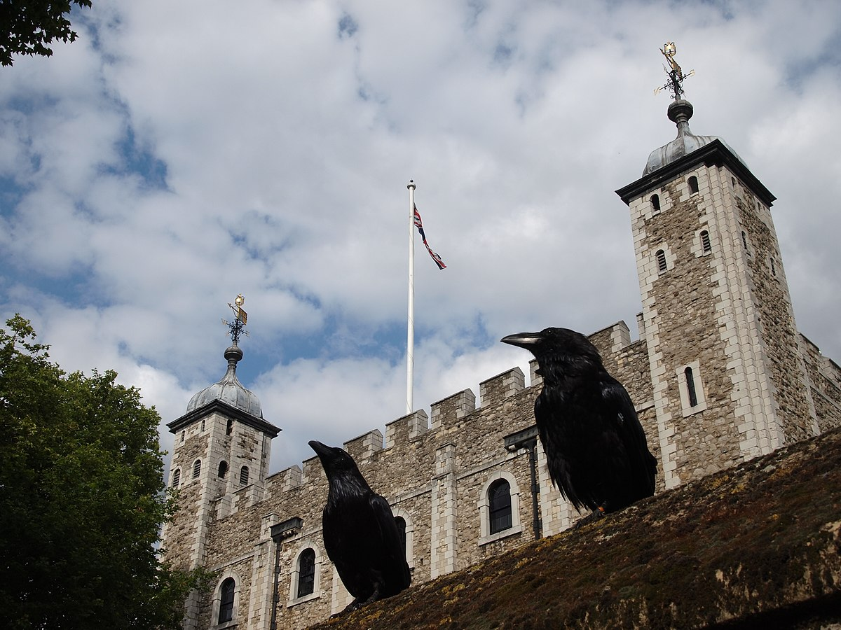 Two ravens and the Tower of London.JPG