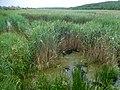 Tylihul River, Levadivka.jpg